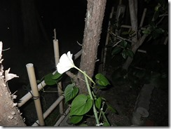 yuugaosaita1