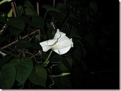 yuugaosaita2