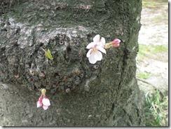 sakurakouen