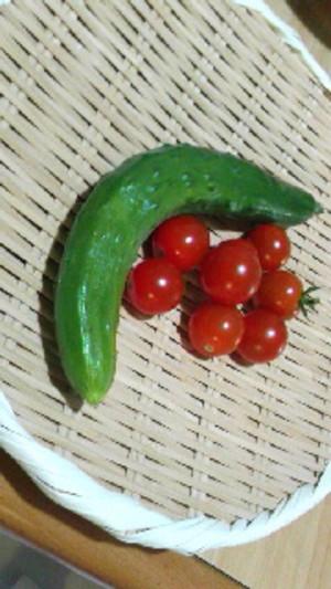 Kyuuri_tomato